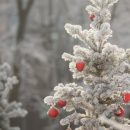 Погода 16 января: синоптики обещают морозы