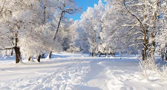 Очень много снега: синоптики рассказали о погоде 18 января