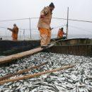 Россия и Украина смогли договориться о рыболовстве в Азовском море