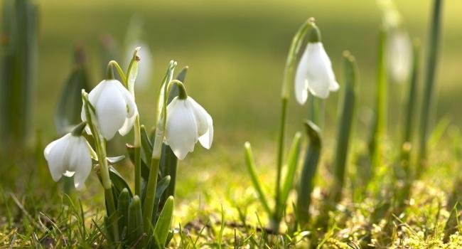 Еще одно похолодание, после чего настоящая весна: синоптик порадовала прогнозом на неделю