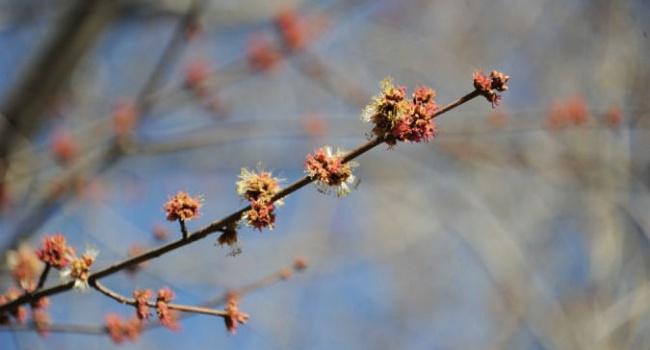 После Пасхи настоящая весна, — прогноз синоптиков