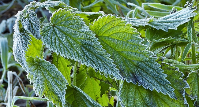 Будет холодно: синоптики предупредили о заморозках