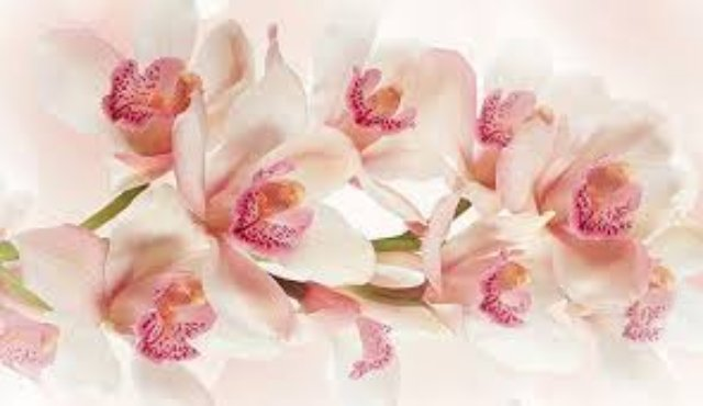 Лучший вариант подарка близкому человеку – цветы