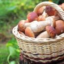 Из-за отравления грибами в Луганской области умер 8-летн6ий ребенок
