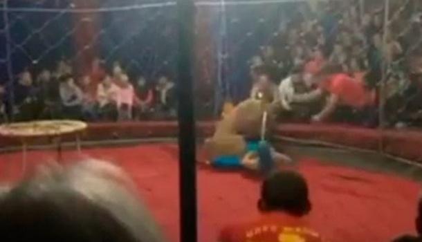 В российском цирке львица напала на ребенка
