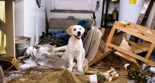 Какую собаку выбрать для квартиры