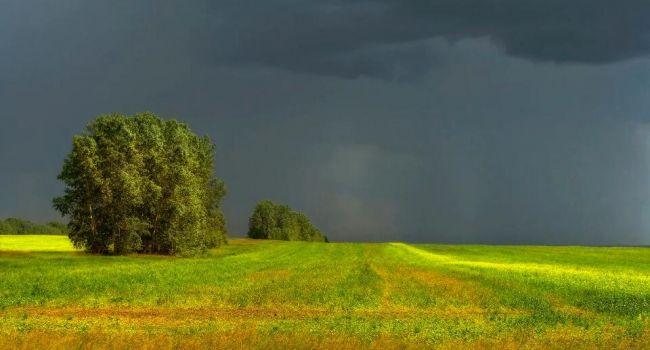 Грозовые дожди и комфортная температура: синоптики рассказали о погоде в начале недели