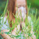 Амброзия «пробуждает» аллергические реакции