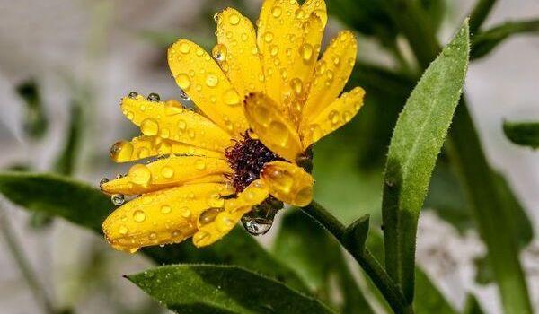 Жары уже не ждите: народный синоптик рассказал о погоде в августе