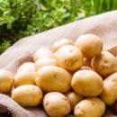 Проблема только усугубится: Эксперты рассказали о росте цен на картофель