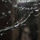 Абсолютная весна: синоптик рассказала о погоде в первые дни февраля