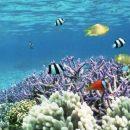 Ученые бьют тревогу - к 2100 году в мировом океане исчезнут практически все коралловые рифы