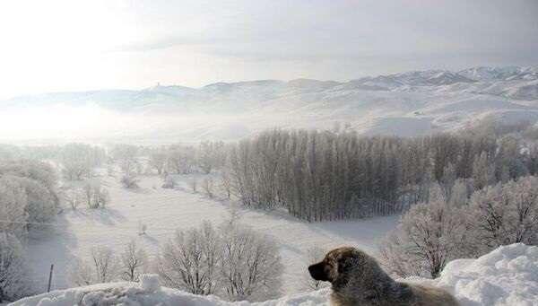 Снег будет выпадать все реже: синоптик дала прогноз на ближайшие зимы в Украине