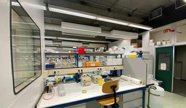 Ученые из Нидерландов открыли антитела к коронавирусу: началась подготовка к разработке лекарств