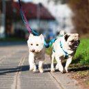 «Как приручить собаку из приюта»: Кинолог поделился важными рекомендациями