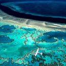 В большом барьерном рифе «погибло» половина кораллов: прогнозы устрашающие
