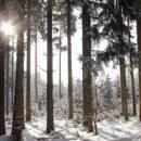 Процесс глобального потепления невозможно остановить: директор Гидрометцентра рассказал о погоде этой зимой