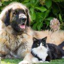 Учёные из Китая из Японии оценили преданность кошек и собак