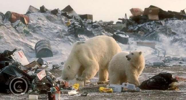 Заключённых в России собираются отправлять в Арктику на уборку мусора