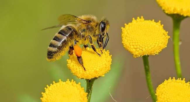 «По содержанию витамина А ему нет равных»: Является отличным антисептиком, названа польза пчелиного воска